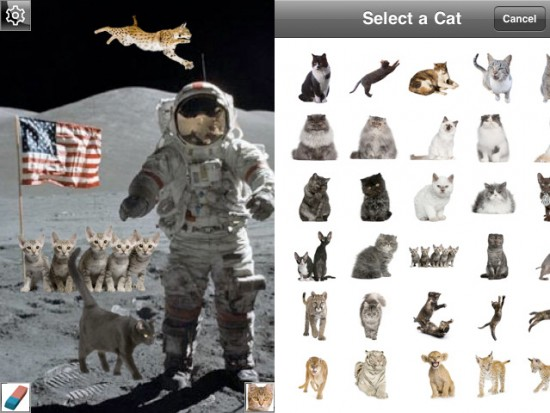 Granted, if you took a photo on the moon you should probably put cats on it regardless.