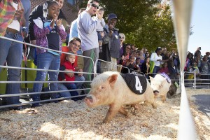 Help fund the running of the pigs, get cool stuff