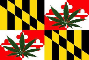 maryland_marijuana_large