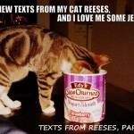 23 NEW TEXTS FROM MY CAT REESES, AND I LOVE ME SOME JEWS!